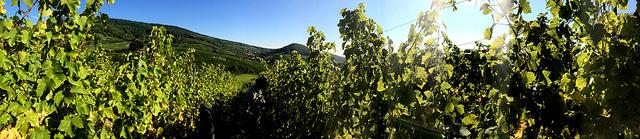 Alsace Bohn 09