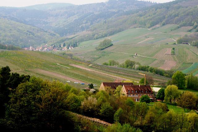 Alsace Bohn 17
